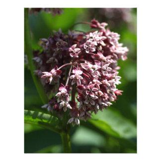 Southern Wormwood (Artemisia abrotanum) Letterhead
