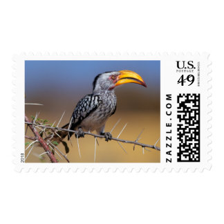 Southern Yellow-billed Hornbill Stamp
