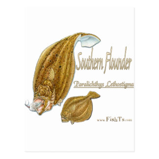 southernflounderspecies post cards