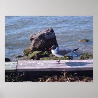 Southport, North Carolina - Seagull Poster