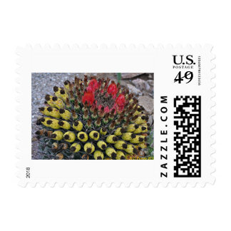 Southwest Desert Catus In Bloom Postage Stamp