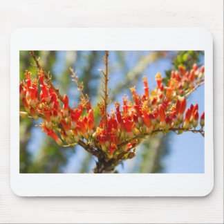 Southwest Ocotillo Bloom Mouse Pad
