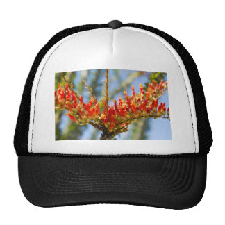 Southwest Ocotillo Bloom Trucker Hat