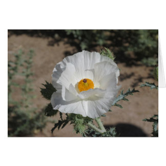 Southwestern Pricklypoppy Card