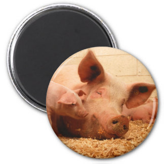 Sow and Piglets 2 Inch Round Magnet