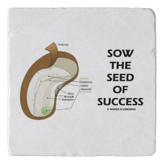 Sow The Seed Of Success Dicotyledon Bean Seed Trivet