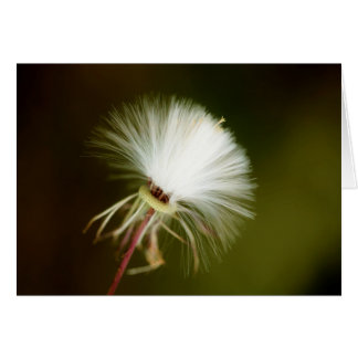 Sow Thistle Seed Pod Card