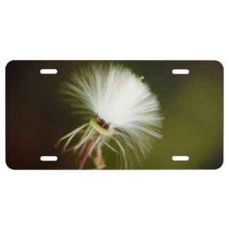 Sow Thistle Seed Pod License Plate