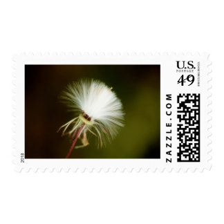Sow Thistle Seed Pod Postage