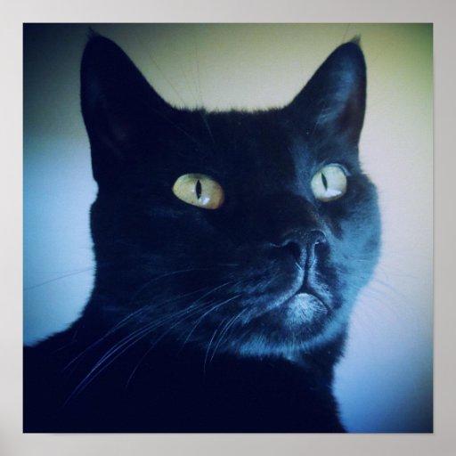 Soy impresión del gato impresiones