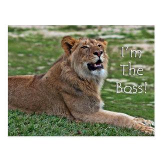 Soy la postal del león de Boss