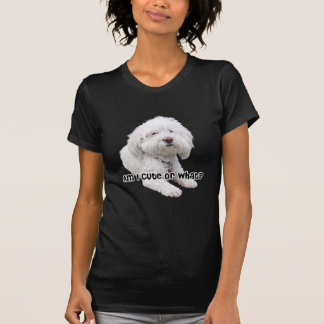 ¿Soy lindo o qué Fotografía del perro de Bichon F Camisetas