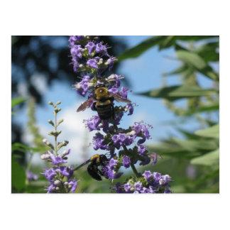 Soy productos de una abeja ocupada tarjetas postales