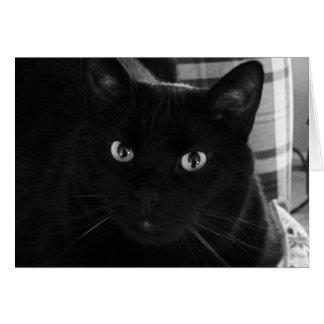 Soy tarjeta de cumpleaños chocada del gato negro