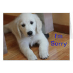 Soy tarjeta triste de la disculpa