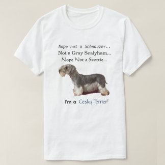Soy un Cesky Terrier Playera