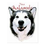 Soy un Malamute - sonrisa Tarjeta Postal