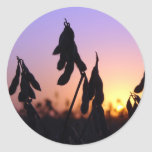 Soybeans at Sunset Stickers