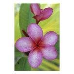 SP de la flor, del Plumeria.), South Pacific, Niue Cojinete