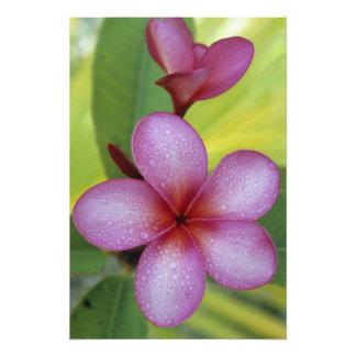 SP de la flor, del Plumeria.), South Pacific, Niue Impresion Fotografica