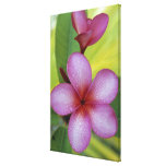 SP de la flor, del Plumeria.), South Pacific, Niue Lona Envuelta Para Galerías