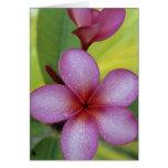 SP de la flor, del Plumeria.), South Pacific, Niue Felicitacion