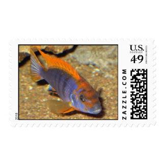 SP de Labidochromis Hongi