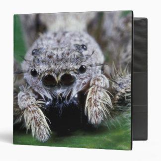 SP de salto de Metaphidippus de la araña de Metaph