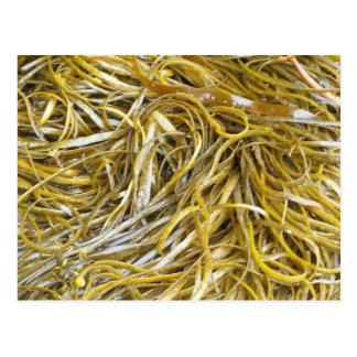 Spaghetti Seaweed Postcard