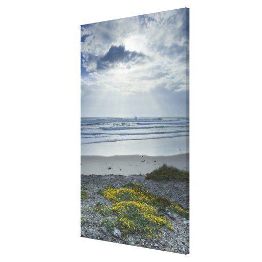 Spain Coastline with Yellow Flowers and Sun Beams Canvas Prints