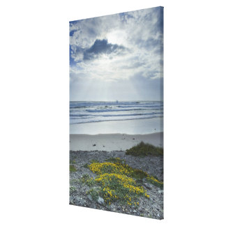 Spain Coastline with Yellow Flowers and Sun Beams Canvas Print