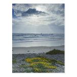 Spain Coastline with Yellow Flowers and Sun Beams Postcard