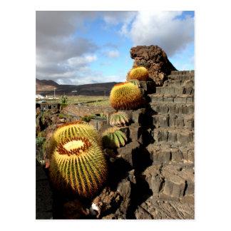 Spain Lanzarote 04 cactus garden Postcard