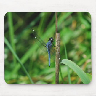Spangled Skimmer Dragonfly Mouse Pad