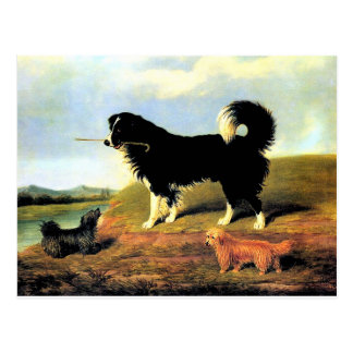 Spaniel and Two Norfolk Terriers Postcard
