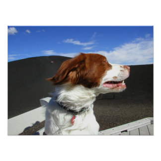 Spaniel at Craters of the moon Poster
