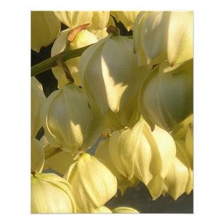 Spanish Bayonet Yucca I Photo Print