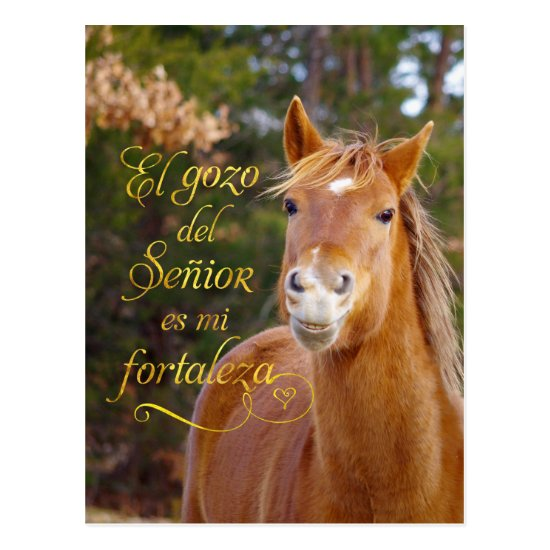 Spanish Bible Verse Smiling Horse Postcards