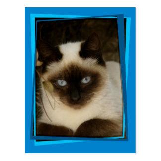 Spanish cat 1 postcard