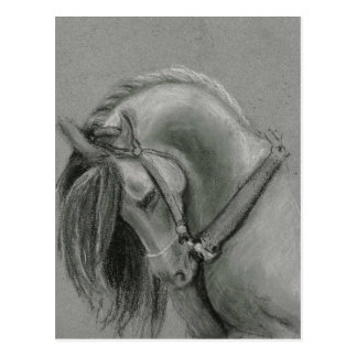Spanish Horse Drawing by Lucinda Knowlton Postcard