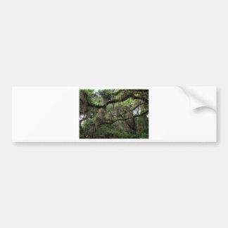 Spanish Moss Adorned Live Oak Bumper Sticker