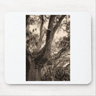 Spanish Moss Adorned Live Oak In Sepia Tones Mouse Pad