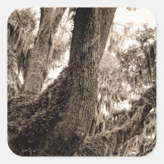 Spanish Moss Adorned Live Oak In Sepia Tones Square Sticker