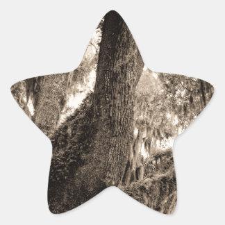 Spanish Moss Adorned Live Oak In Sepia Tones Star Sticker