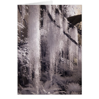 Spanish Moss/Infrared Photography Card