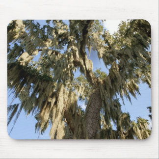 Spanish Moss Mouse Pad