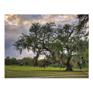 Spanish Moss on Live Oak in New Orleans Postcard