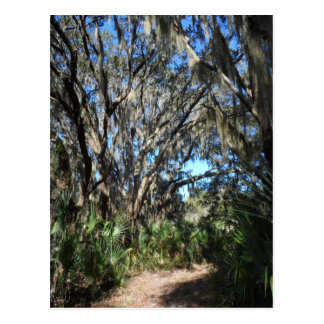 Spanish Moss Trail Postcard