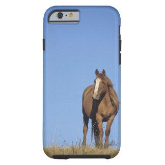 Spanish mustang (Equus caballus), wild horse, Tough iPhone 6 Case