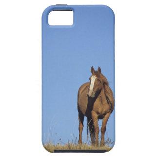 Spanish mustang (Equus caballus), wild horse, iPhone 5 Case